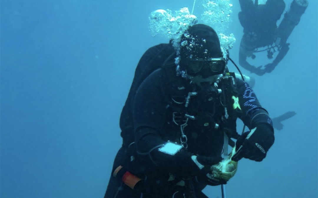 Top 10 Questions People Have About Scuba Diving